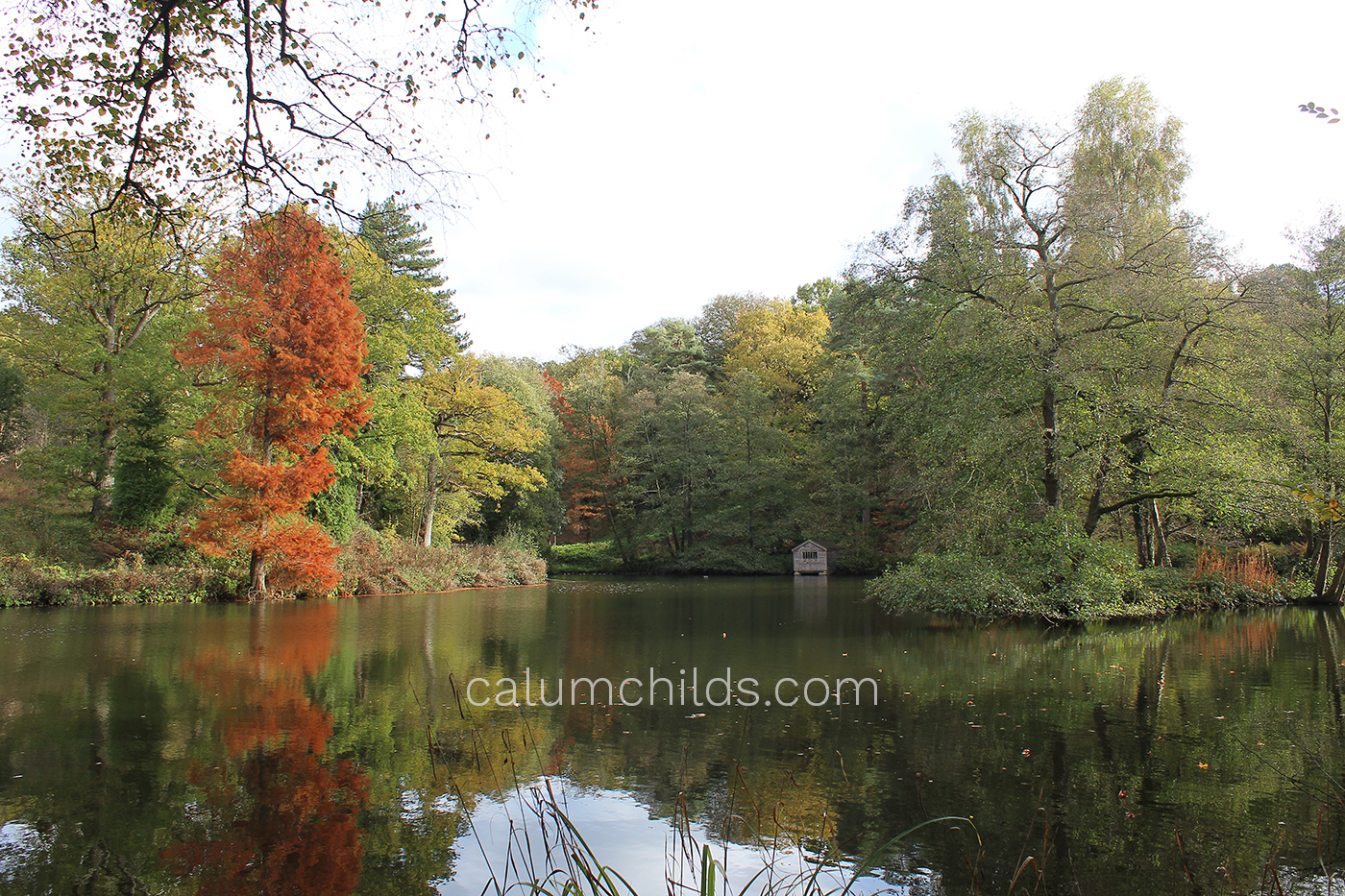 Trees with their orange, green and yellow leaves sitting on the riverbank of a large lake.