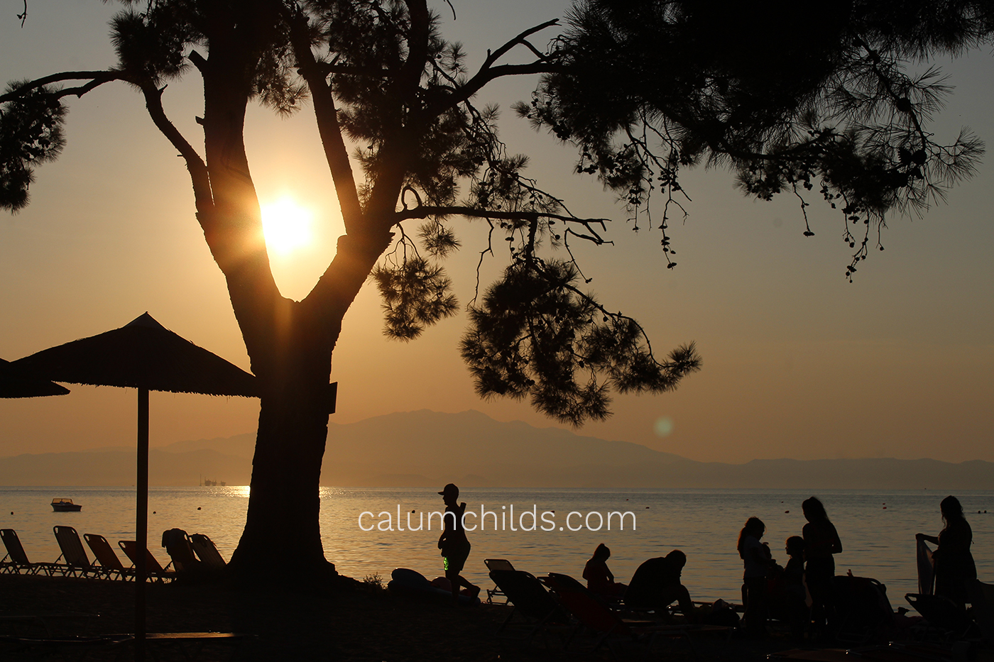 The sun shines through a pine tree, with silhouettes of people and umbrellas surrounding it.